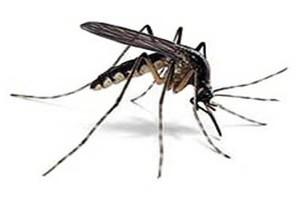 prosegue la lotta alla zanzara tigre